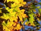 PAL: Autumn video