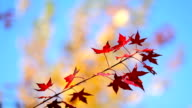 Autumn video