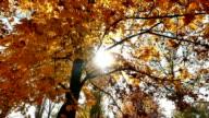 autumn walk in forest video