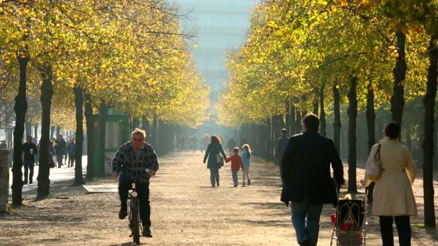 Autumn walk in sunshine video