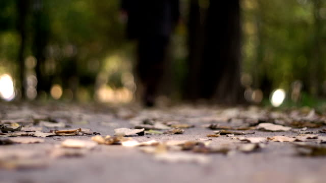 autumn walk video