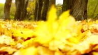 Autumn Wind video