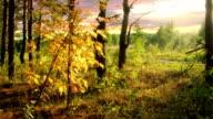 Autumn wood 1 time lapse video