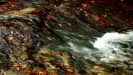 Autumnal colors leaves in cold mountain river video