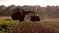 Autumnal harvest. video