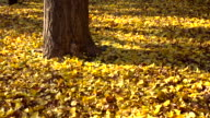Autumnal leaf on the ground video