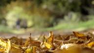 Autumnal Park Background video