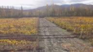 Autumnal vineyards,  aerial video video