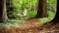 Autumnal Woodland Path video