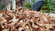 Autumn's cleanup on the backyard. Teenager girl raking up fallen leaves together for removal. video