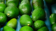 Avocados rolling in packaging line, close up video