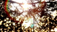 Awakening of Nature and the Arrival of Spring video