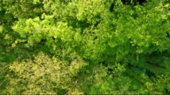 Awesome Deciduous forest aerial view video