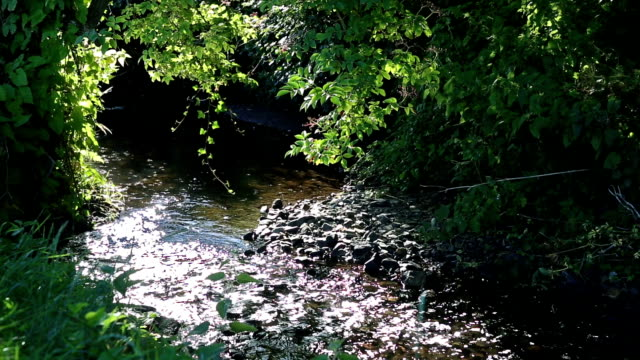 Babbling Stream in Dappled Sunlight video