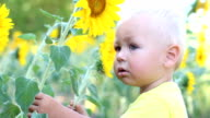 Baby and sunflower video