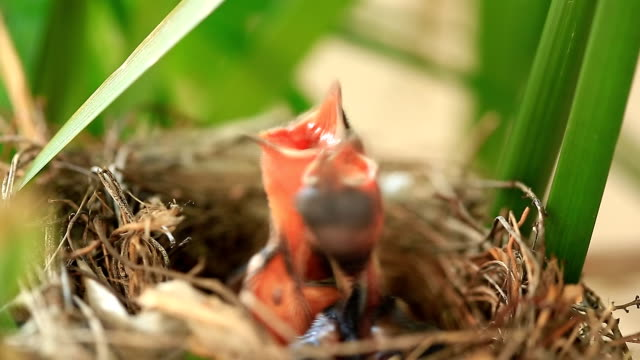 Baby bird hungry video