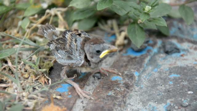 baby bird in nest video