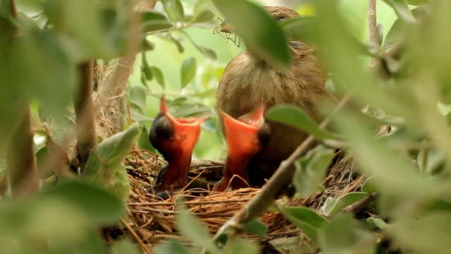 Baby birds video