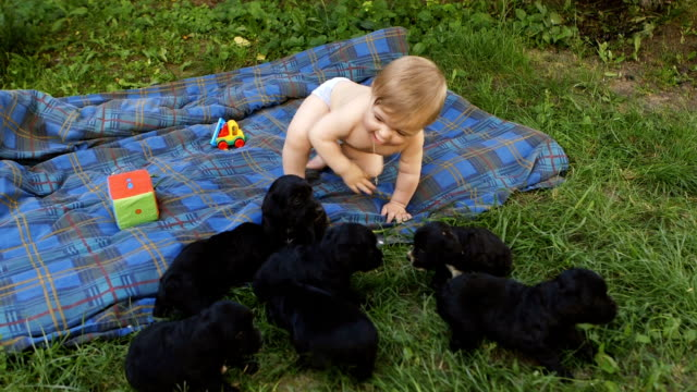 Baby boy playing with puppies outdoors. video