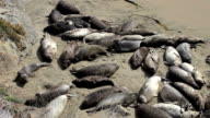 Baby Elephant Seal Crying On The Beach video
