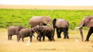 Baby elephants playing in Amboseli Park, Kenya video