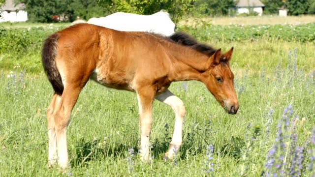 Baby horse pasture video