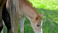 Baby horse video