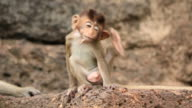 Baby monkey is scratching video