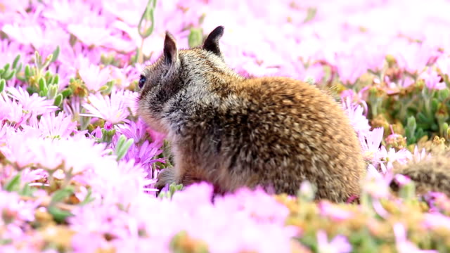 Baby Squirrel among flowers video