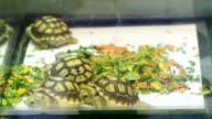 Baby Tortoises video