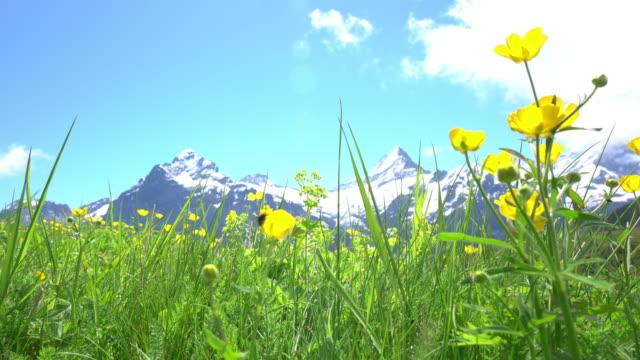 Bachalpsee-First Grindelwald Switzerland video