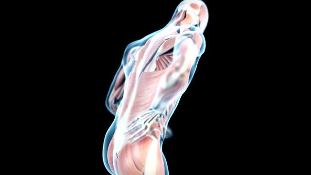 backache video