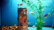 background aquarium fish blue calm swim grass saver video video