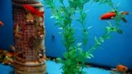 background fish aquarium blue calm swim grass saver video video