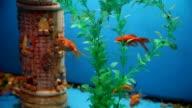 background fish blue aquarium calm swim grass saver video video