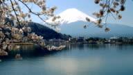 background of Mt Fuji and Cherry Blossom at lake Kawaguchiko video