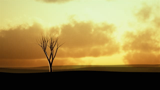 Background with tree growing at sunset. Object on the left. video