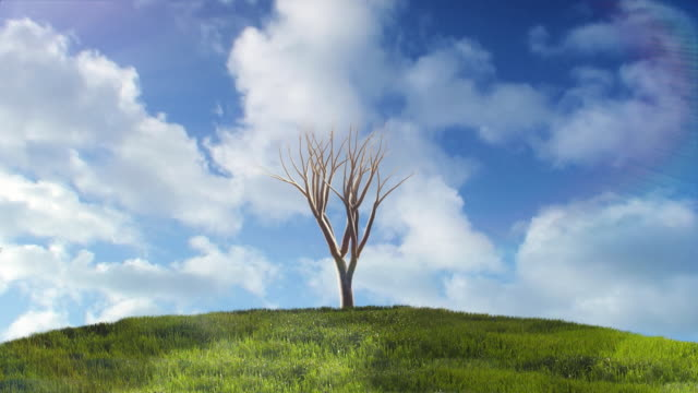 Background with tree growing on hill.  Timelapse clouds and shadows video