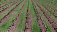 Backing up over vineyard to Green field Aerial Wine to Market to Farm to Market in Austin Texas video