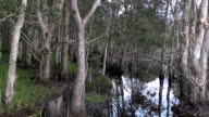 Backwater with Trees and Grasses at Reservoire video