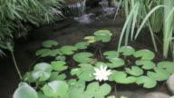 Backyard garden water features video