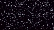bacteria background render video