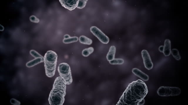 Bacteria seen by electron microscope 1080p Loop video