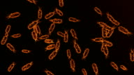 bacteria video