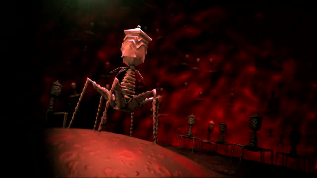 Bacteriophage infecting bacterium video