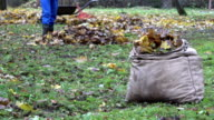 bag full of autumn leaves and blurred worker rake colorful foliage in farm. FullHD video