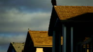 Bald eagle perched upon a rooftop video