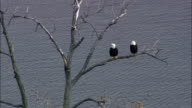 Bald Headed Eagles - Aerial View - New York,  Ulster County,  United States video