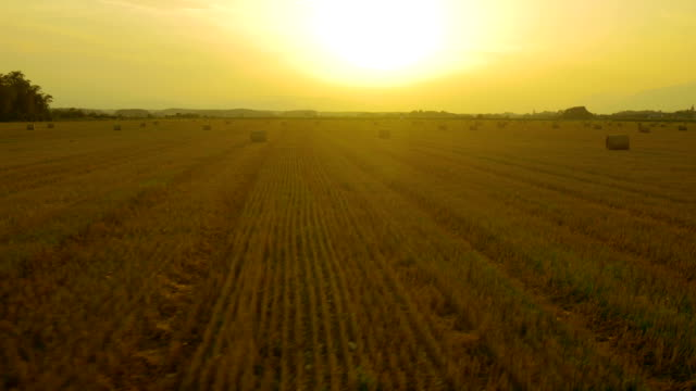 AERIAL: Bales of hay on a field at sunset video