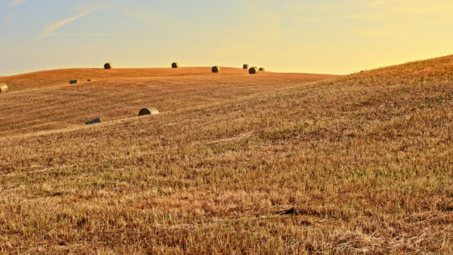 DS Bales of wheat in gold color video